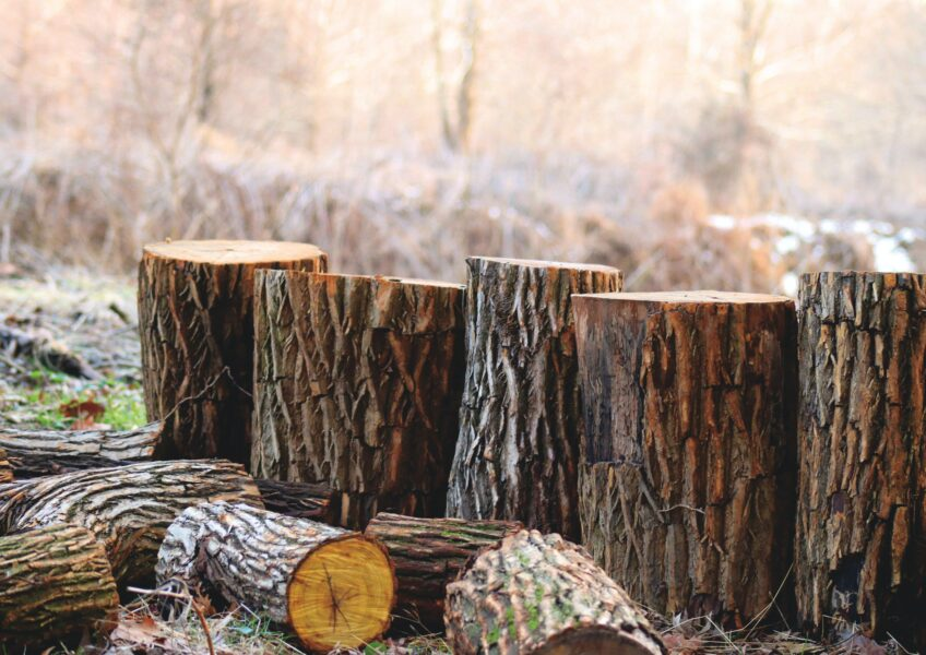 How Lumber is Obtained from Trees