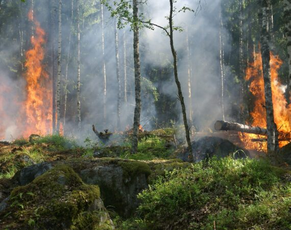 What Causes Wilfires